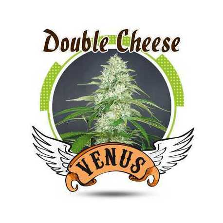 DOUBLE CHEESE (100)