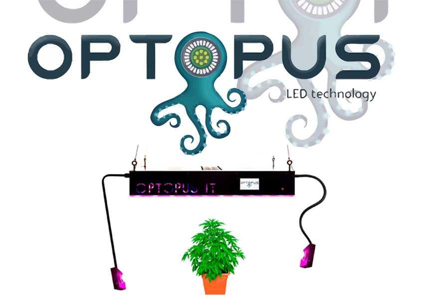 optopus
